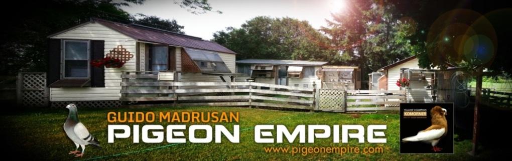The Loft Report: Guido Madrusan Pigeon Empire