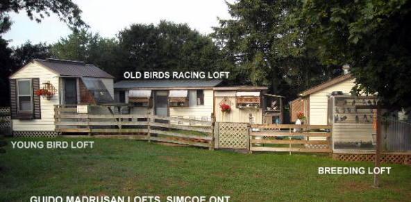 2013 Pigeon Empire Racing Lofts